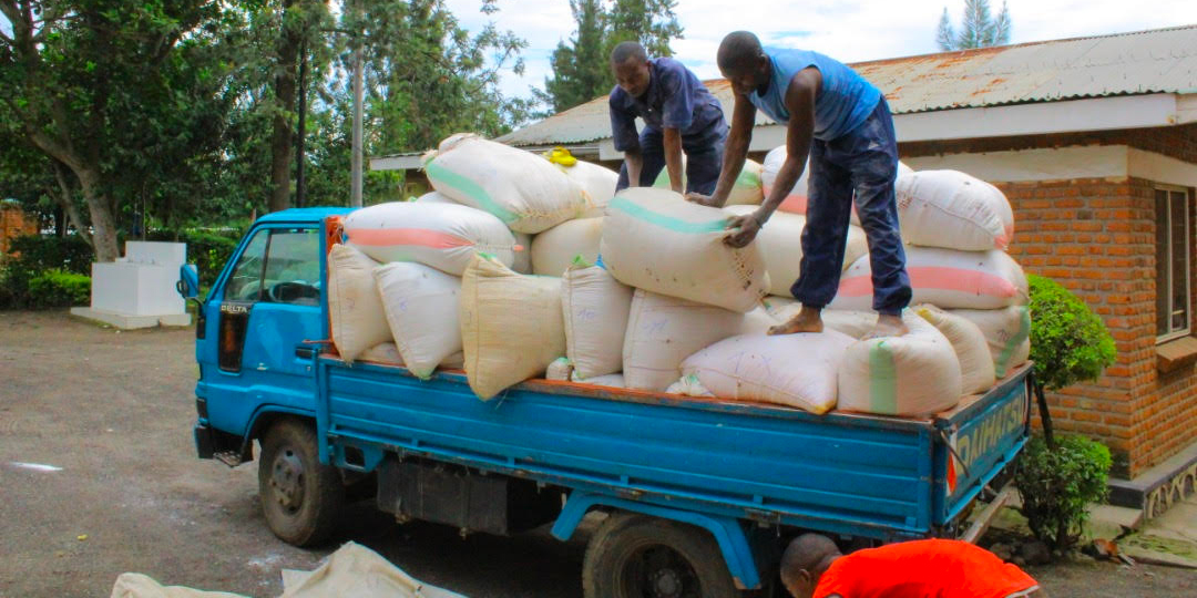 UInloading maize and beans in Rubavu District